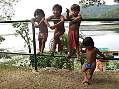 Embera Indian children, Panama (ali eminov) Tags: tribalpeople indigenouspeople embera emberaofpanama children loinclothes katuma emberaindians centralamerica