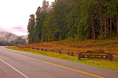 Prairie Creek Redwoods State Park (kmanohar) Tags: california northerncalifornia worldheritagesite humboldtcounty redwoodnationalpark northerncaliforniacoast temperaterainforest prairiecreekstatepark prairiecreek redwoodpark prairiecreekredwoods redwoodcoast humboldtcountyca humboldtcountycalifornia prairiecreekredwoodsstatepark redwoodsstatepark pacificrainforest klamathcalifornia oldhighway101 prairiecreekpark internationalbiospherereserve redwoodpreserve newtonbdruryscenicparkway californiarainforest northwestrainforest newtonbdruryparkway newtonbdruryhighway newtonbdruryroad oidus101 oldushighway101 redwoodreserve newtonbdrury newtonbdruryscenichighway