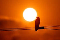 Sun-day (Kausthub) Tags: sun india reflection bird water sunrise crane availablelight handheld ripples backwaters tamilnadu 2010 muttukadu canoneos7d canonefllens canon100400mmf4556isusmllens