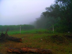 RIMG6160x1000 (Weltbummler) Tags: yerbabuena tucumn bosquenublado nuboselva