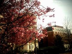 "Spring in DC <a style=""margin-left:10px; font-size:0.8em;"" href=""http://www.flickr.com/photos/36521966868@N01/4463226164/"" target=""_blank"">@flickr</a>"