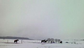 Nachmittagspferde (4) - Vorschau
