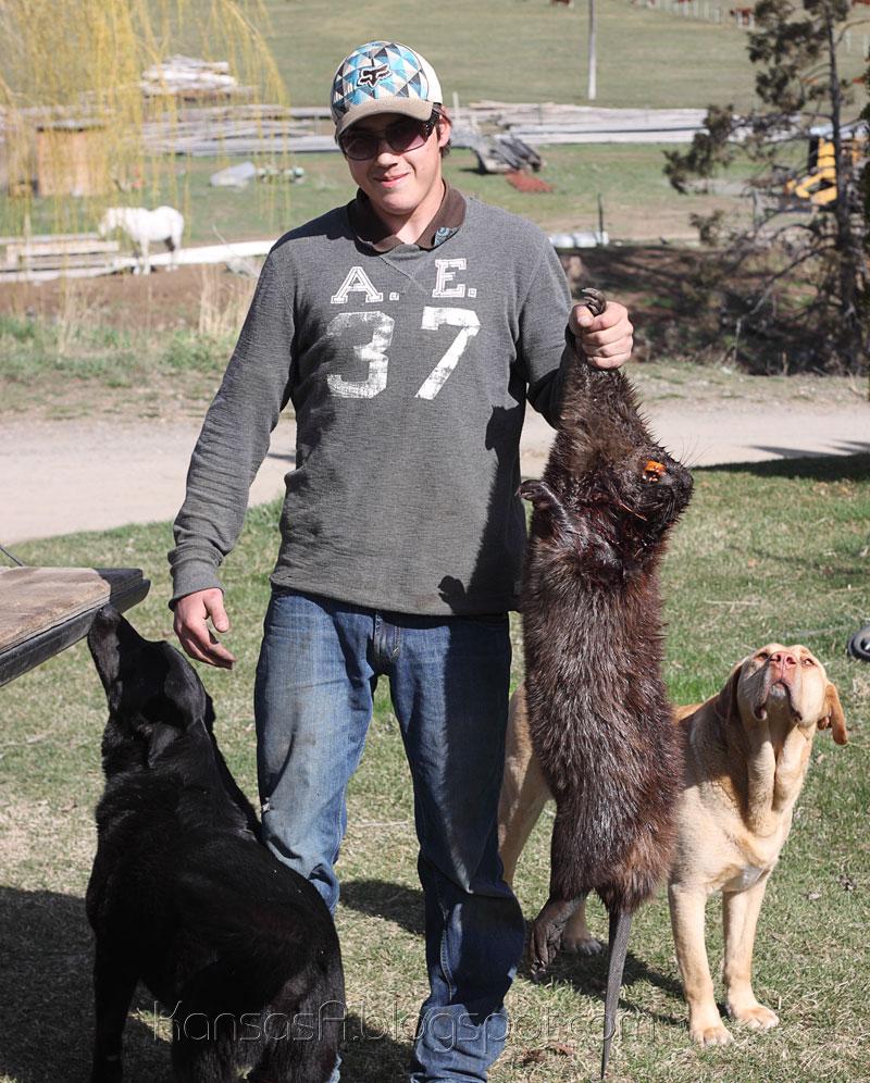 Mikey & the Beaver (by KansasA)