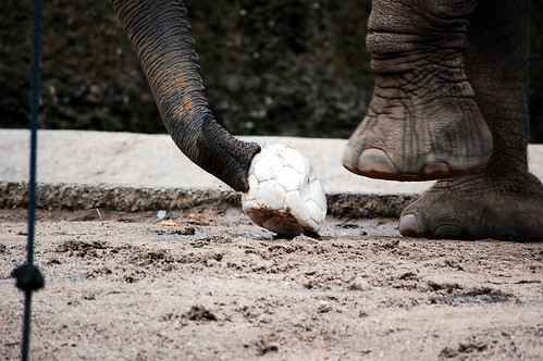 Elephant Soccer World Champion