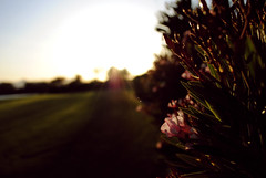 """i only thought of me, and and now you're all i see"" - snow patrol (jmrpixie) Tags: park pink flowers blue light sunset shadow red sky orange sun sunlight lake plant flower green up grass sunshine yellow vintage dark lens outside blurry bush focus glare shine close natural bright sharp edit"