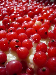 Finnish Redcurrant Cake (dichohecho) Tags: red food cake fruit frozen berries finnish homegrown scandinavian uncooked redcurrants prebaking dichohecho metalflantin removablebottom