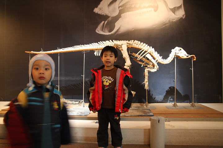 中正廟恐龍展000022