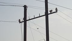electricity birdonwire tangoandcash
