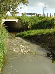 Water pollution from dairy operation