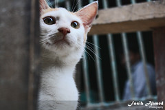 Street Cat (Fasih Ahmed) Tags: cat greeneyes streetcat greencateyes
