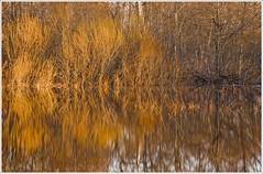 20100411. Kurtna auk. Flooding. Reflections. 3343. (Tiina Gill (busy)) Tags: nature water reflections spring flooding estonia rubyphotographer vanagram dragondaggerphoto yourwonderland