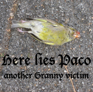 Dead Paco the Parakeet