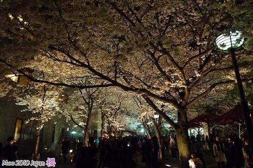 白川祇園-夜櫻1