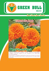 hat giong hoa cuc van tho marigold flower seed  60 k (WatermelonSeeds) Tags: marigold flowerseed flowersseeds    marigoldflowerseed                                           flowersseed