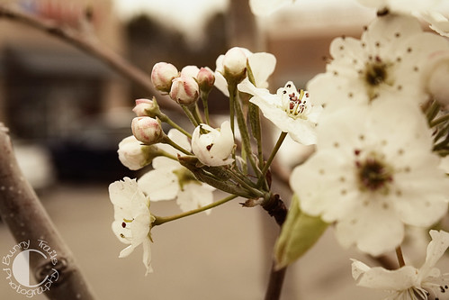 111-soft blossom
