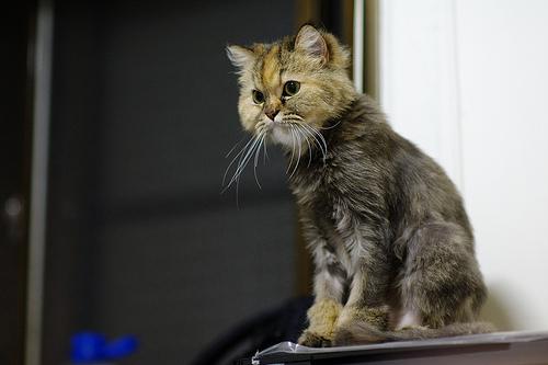 新鏡頭隨拍三張貓咪無閃燈版