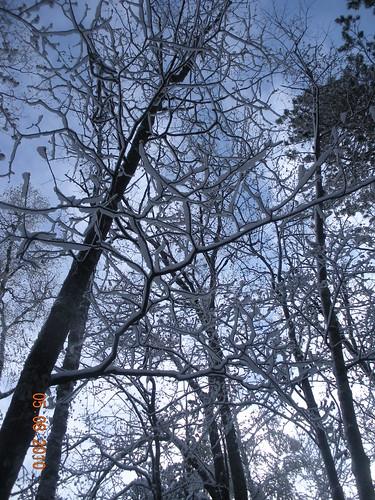 May Snowfall