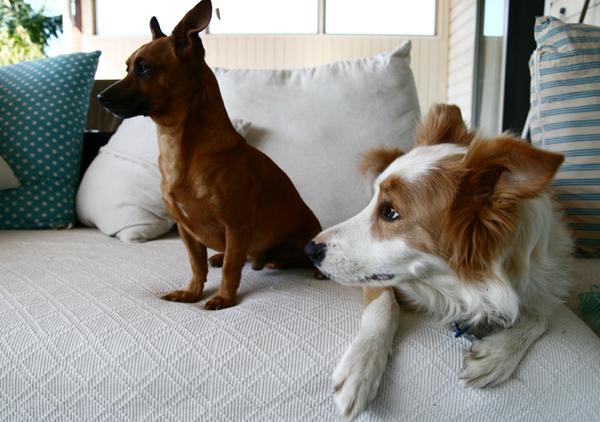 Pip and Maisie3-2