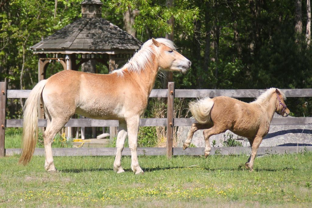 horses 224x