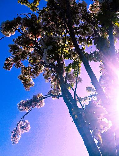 170510_ blossom