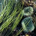 grass and sea anemones