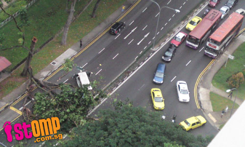 Fallen tree halts morning peak traffic in both lanes at Jln Bt Merah