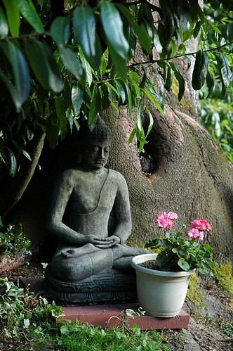 Garden Buddha, statue, meditation position under a large tree with pink flower offering, Wedgwood, Seattle, Washington, USA