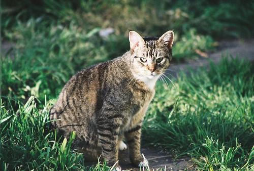 Pesky Cat