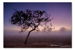 Nature's Candy in my Hand or Can or Pie ([ Kane ]) Tags: morning light mist cold colour tree art grass fog photoshop canon landscape photography dawn early day wideshot sigma australia brisbane workshop qld queensland kane dri ipswich workshops gledhill sigma1020 kanegledhill wwwhumanhabitscomau kanegledhillphotography wwwdigitalphotographycoursescomau