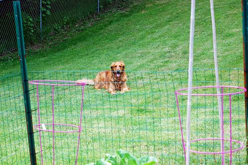 Garden Defender 052310