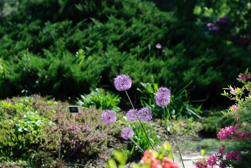 Spring in Botanic garden #48