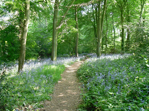 Winterbourne: Bluebell woods