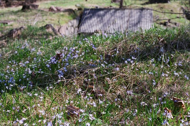 Springlike scenery