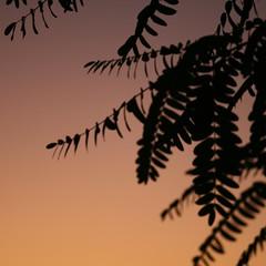Just Let Me Go (Mel VDL Photography) Tags: sunset 2 black color silhouette backlight square squared contrejour 500x500 leavemebe focusschmocus blackoncolor justwatchmysilhouetteandletmego endsarebeginnings flairandsquare
