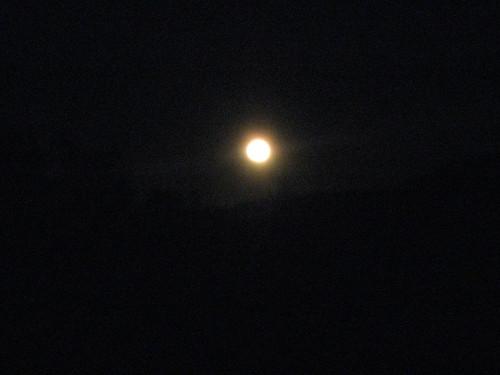 05.29.2010 bruinslair 003