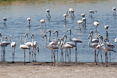 IMG_3029 (elkost) Tags: birds kalochori