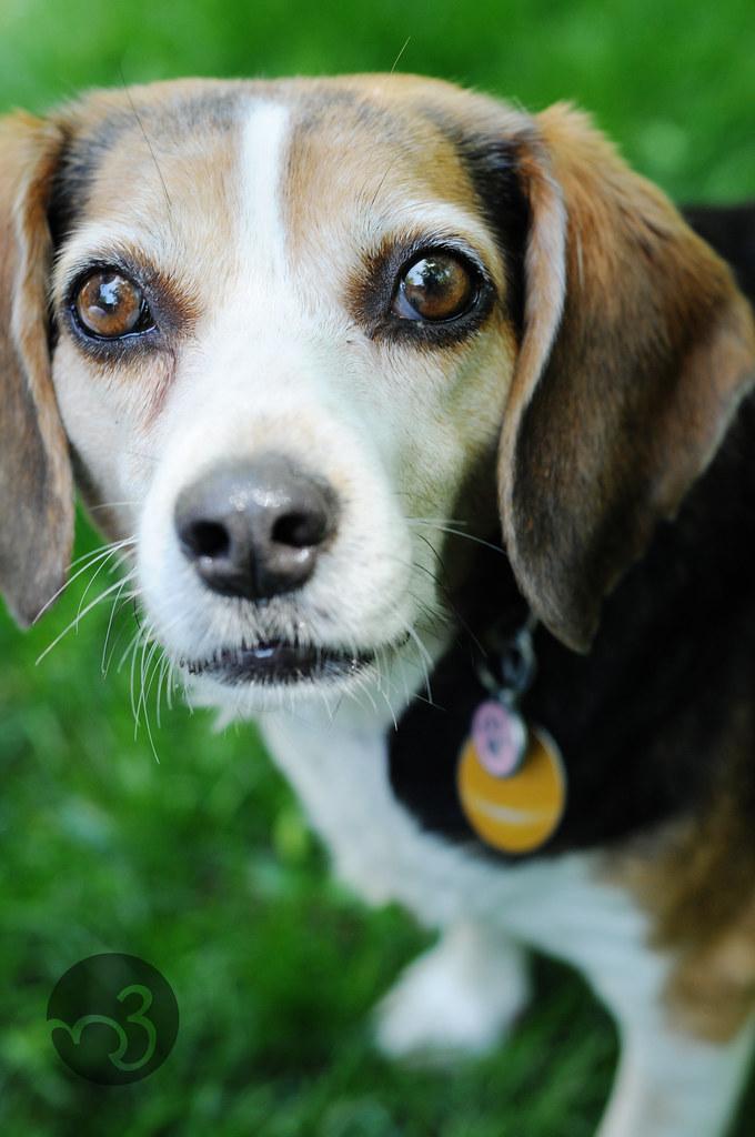 Ebby the Dog
