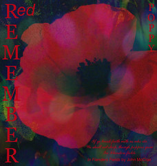 Red Poppy for Remembrance (virtually_supine popping in and out) Tags: red flower graphic text creative vivid manipulation textures poppy layers remembrance fonts redpoppy photoshopelements7 awardtree itstexturedchallenge