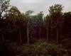 (Gebhart de Koekkoek) Tags: vienna trees green film nature forest kodak 4x5 linhof portra largeformat 160 technika