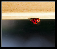 She came in through the bathroom window [explore, 17.6.2010] (_esse_) Tags: window canonef50mmf18 finestra luck ladybug fortuna bathroomwindow coccinella atestaingi vamol almomentoincasaneho5 finestradelbagno