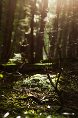 Moss and light (absencesix) Tags: trees sky plants usa sun sunlight nature weather washington moss unitedstates bokeh iso400 events may noflash northamerica lightandshadow ef2470mmf28lusm hikes locations 2010 70mm mountbakersnoqualmienationalforest mtbakersnoqualmienationalforest laketalapustrail camera:make=canon geo:state=washington exif:make=canon exif:iso_speed=400 exif:focal_length=70mm canoneos7d canon7d apertureprioritymode hasmetastyletag hascameratype selfrating4stars 1100secatf40 may152010 geo:countrys=usa exif:lens=ef2470mmf28lusm camera:model=canoneos7d exif:model=canoneos7d exif:aperture=40 laketalapus05152010 geo:city=mountbakersnoqualmienationalforest mountbakersnoqualmienationalforestwashingtonusa subjectdistance319m geo:lat=47410032341474 geo:lon=12151396275616 472436n1213050w