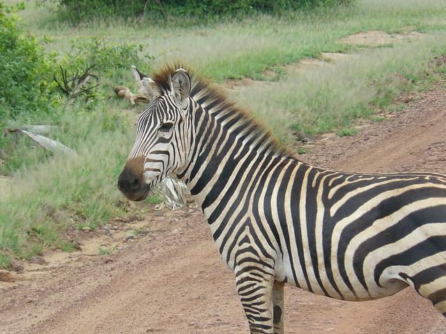 Tanzania 151