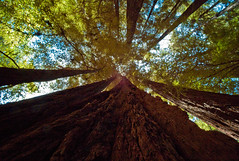 Muir Woods, San Francisco (claudio jeldres) Tags: park leica tree san francisco pic m8 parc sequoia leicam8 sanfranciscoaua2010