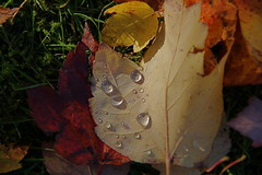 Diamonds are for ever (sofarsocute 'ignore faves ONLY') Tags: autumn canada water vancouver automne agua aqua eau wasser britishcolumbia h2o