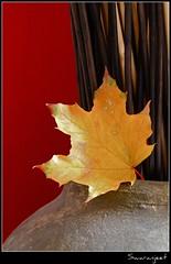 "Autumn leaves that just ""happen"" to to be in cute places 3 - IMG_0321_2 (Swaranjeet) Tags: friendlychallengeswinner mygearandme chicago swaranjeet sjs ef100mmf28lisusmmacro eos7d 2010 favourites photos singh mumbai thane india swaran swaranjeetsingh sjsvision sjsphotography swaranjeetphotography canon apsc eoe 7d mmr financial capital"