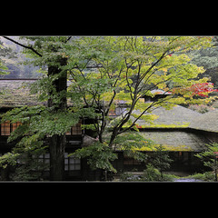 Chojukan ryokan (Laurent T (aka thery_lg)) Tags: wood roof house tree japan forest hotel inn ryokan tradition gunma houshi chojukan
