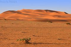 Desert Dunes - Explore (TARIQ-M) Tags: texture landscape sand desert dunes riyadh saudiarabia hdr      canonef70200mmf4lusm    canon400d