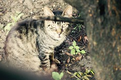 Today's Cat@2017-07-03 (masatsu) Tags: cat thebiggestgroupwithonlycats catspotting pentax mx1