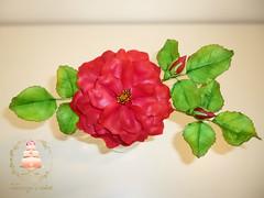Shugar red rose (Albena Bojidarova) Tags: rose red gumpaste shugar cake flowers decorating