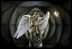 The Angel Of The Cathedral (Daniel Arrhakis) Tags: mysticsurrealism angels odesterrado soaresdosreis mystery romanticism